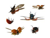 Lady beetle Royalty Free Stock Images