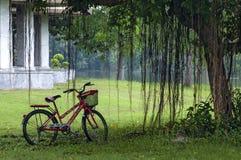 Lady Bike under the  tree in a public park in rainy season Stock Photo