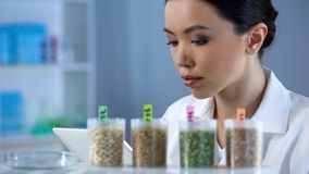 Lady biologist making notes in tablet inspecting pea grains quality, agriculture stock photo