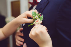 Lady Bird in Boutonniere. Bride pinning boutonniere with lady bird in rose royalty free stock images