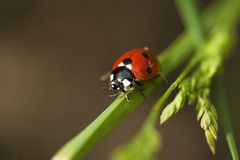 Lady bird Royalty Free Stock Photography