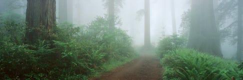 Lady Bird Johnson Grove. In California royalty free stock photos