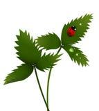 Lady bird on a leaf. Illustration of a lady bird sitting on a leaf with dew drops Royalty Free Stock Image
