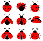 Lady birds icons. Vector illustration Stock Photos