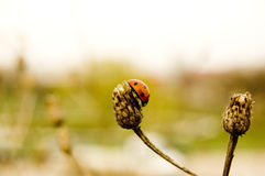 Lady bug. A landscape with a lady bug on a plant Stock Photos