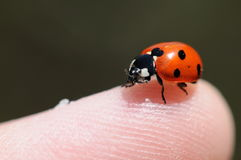 Free Lady Bug Stock Images - 10333954
