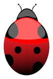 Lady Bug Royalty Free Stock Photos