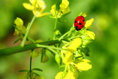 Free Lady Bug Stock Image - 18056811