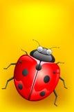 Lady Bug Royalty Free Stock Photos