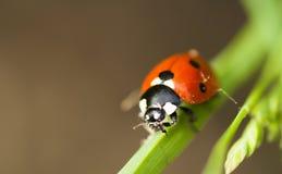 Free Lady Bug Stock Images - 65588634