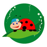 Lady bug. Illustarion of t lady bug,sitting on leaf Royalty Free Stock Image