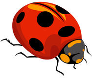 Lady bug Stock Photography