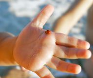 Lady bug on baby's hand. Lady bug on baby's palm Stock Photo