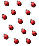 Lady Bug background illustration  Stock Image