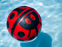 Lady bug ball in a blue swimming pool Stock Photos