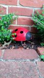 Lady bug in the bushes Stock Photos