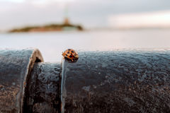 Lady bug in the city stock photos