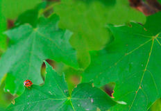 Lady Bug Corner Stock Photography