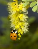 Lady Bug Dining Stock Photo