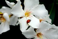 Lady bug stock photos