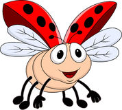 Lady bug flying Stock Image