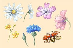 Lady bug flying with flowers set vector collection of cornflower chamomile buttercup with buds for compositions and. Bouquets vector illustration art Stock Photos