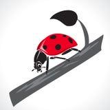 Lady bug graphic Royalty Free Illustration