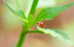 Lady bug in the grass Stock Photo