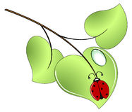 Lady bug on a green leaf. With a dew Royalty Free Stock Image