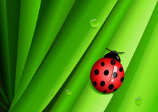 Lady bug on green leaves Royalty Free Stock Photos