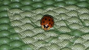 Lady bug on my Yoga mat Stock Photos