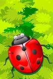 Lady Bug sitting on Leaf Stock Images