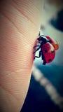 Lady bug 1. Lady bug and skin stock photo Stock Photos