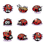Lady Bug Vector Illustration Stock Image