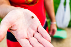 Lady bug and woman Royalty Free Stock Photography