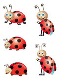 Lady bugs. Illustration of lady bugs on the white background Stock Photo