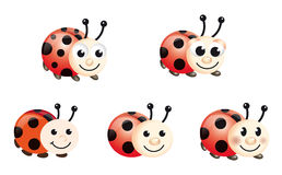 Lady bugs. Illustration of lady bugs on the white background Stock Images
