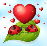 Lady bugs and heart Royalty Free Stock Images