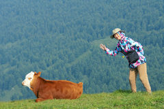 Lady and calf. The pretty Chinese lady and a calf on mountain slope grasslands stock photos