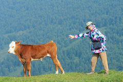 Lady and calf. The pretty Chinese lady and a calf on mountain slope grasslands royalty free stock photo