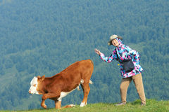 Lady and calf. The pretty Chinese lady and a calf on mountain slope grasslands royalty free stock images