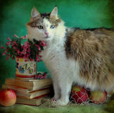 Lady-cat And Still Life Stock Photo