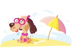 Lady dog on the beach Royalty Free Stock Photography