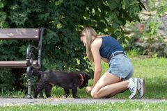 Lady with a dog. royalty free stock image