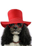Lady dog Royalty Free Stock Photography