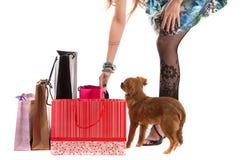 Lady with dog isolated on white background Stock Image