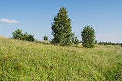 The Lady with the dog. Meadows and expanses of theEuropean part of Russia Royalty Free Stock Photo