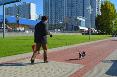 Lady with the Dog. Lady with dog walking on the boulevard  Russia, Moscow Royalty Free Stock Photo