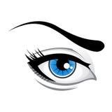 Lady eye. Illustration of lady eye  on white background Stock Image