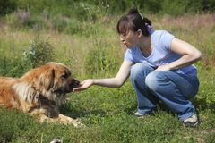 Lady feeding dog Royalty Free Stock Photo